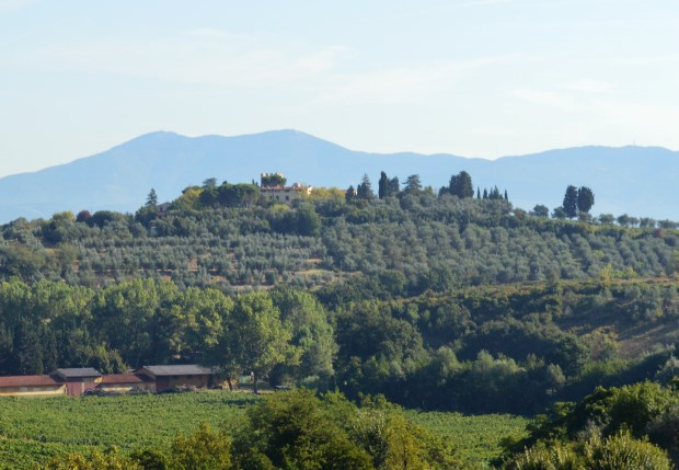 Countryside of Livorno, Olives, Grapes and Tomatoes